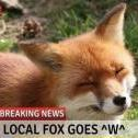 FoxBao